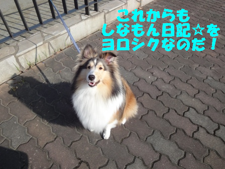 http://cinnamon.xii.jp/wp-content/uploads/2009/11/DSC01348.png